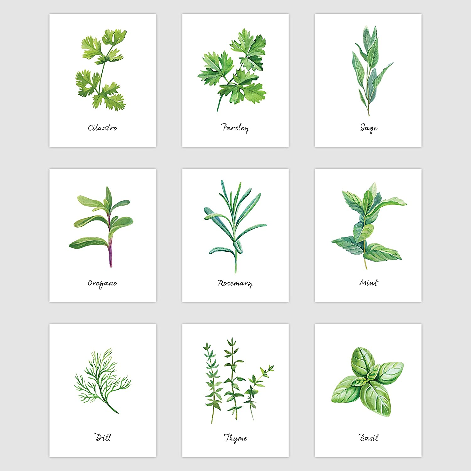 """Palace Learning Kitchen Herb Botanical Prints - Wall Art Decor - Set of 9 Prints (8"""" x 10"""", Unframed Paper Cardstock)"""