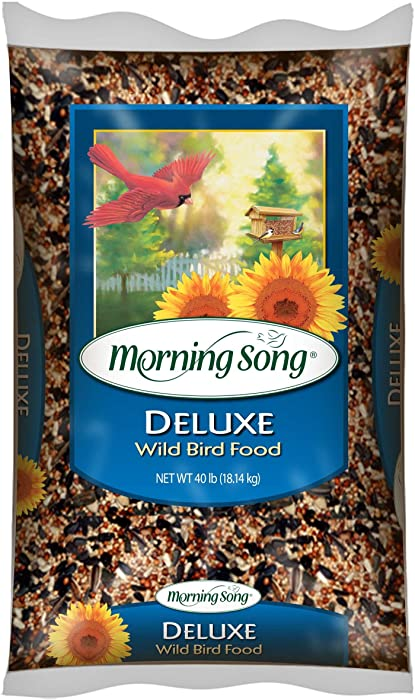 Top 10 Morning Song Wild Finch Wild Bird Food