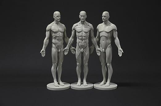 Colección de Figuras de anatomía Masculina: Plano, Ecorche y Piel ...