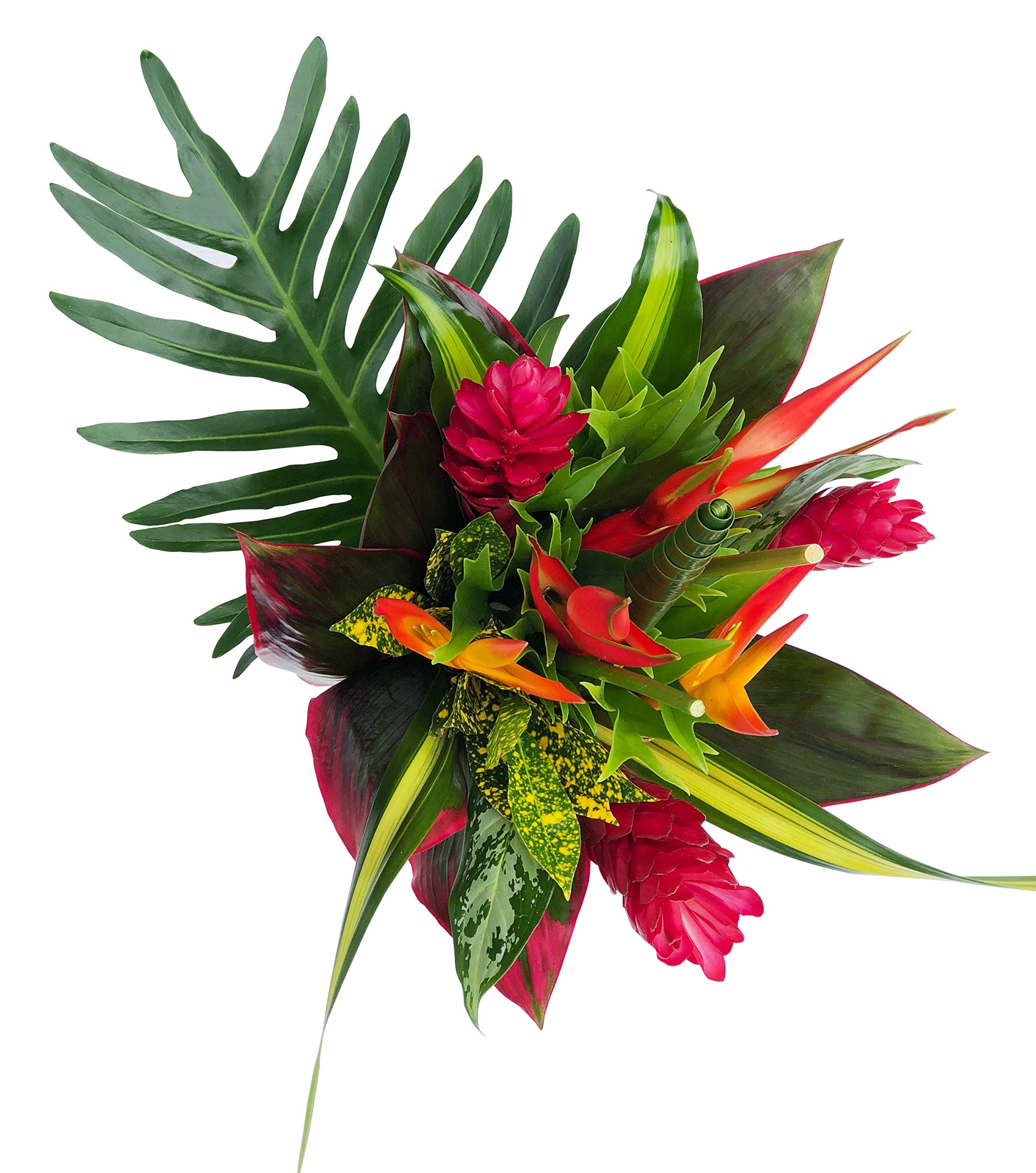 Tropical Bouquet Tropical Treasure with Bright Birds of Paradise, Pink Ginger, and Bold Tropical Greenery by BloomsyBox
