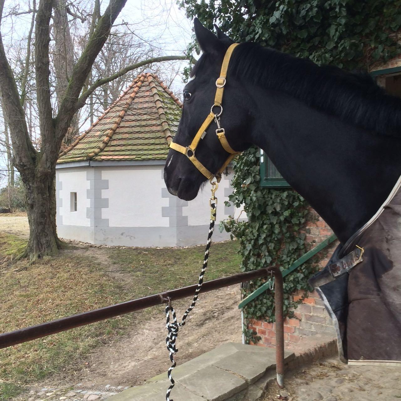 Esel F/ührleine Anbindeseil Pony F/ührstrick f/ür Pferd Ziege Anbindestrick in verschiedenen stylischen Designs
