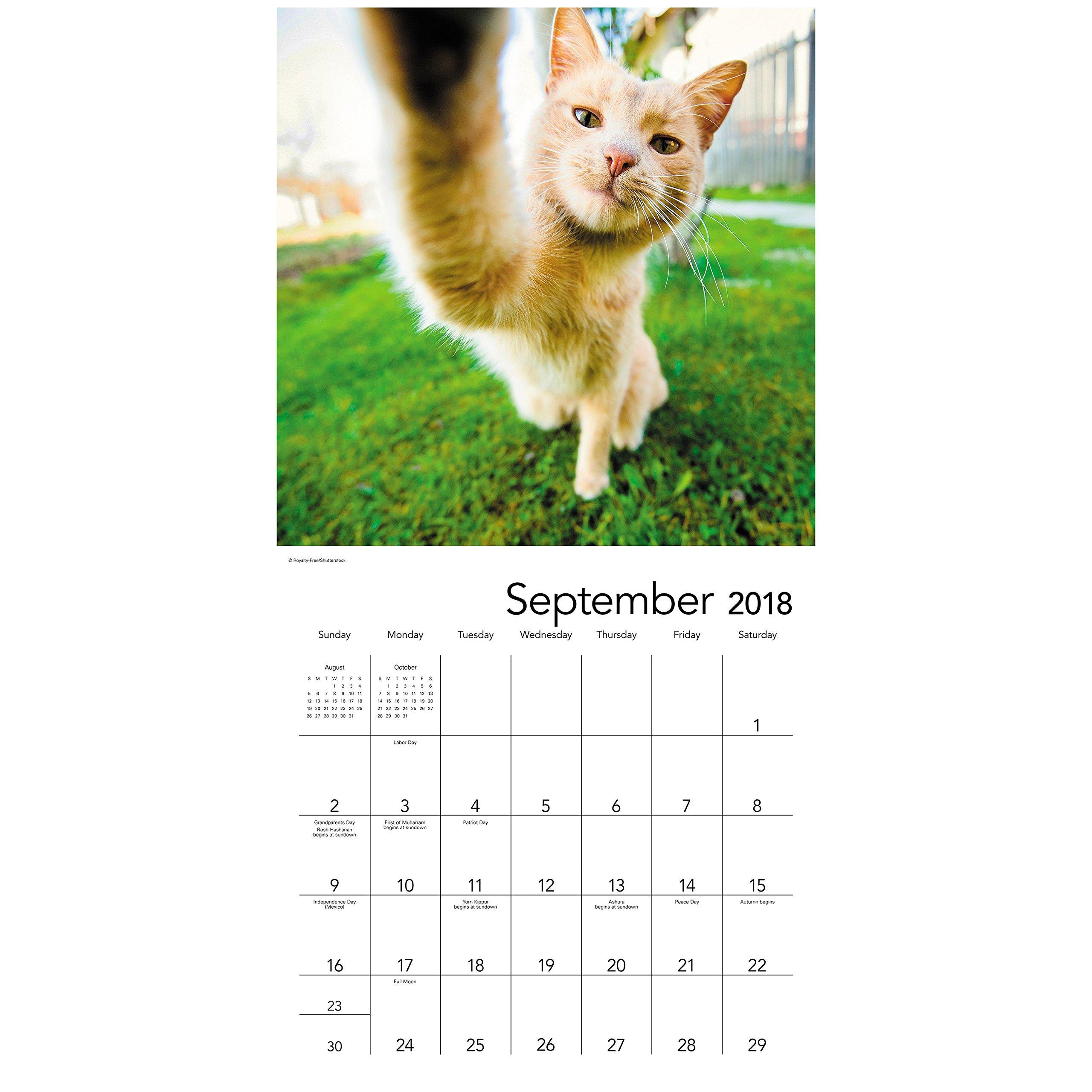 2018 Animal Selfies Wall Calendar (Mead): Mead: 0038576190788: Amazon.com:  Books