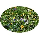 100-150 m² Blumenwiese traumhaft schöne 1001 Nacht Blumenzauber niedrige Sommerblumenmischung, 1 kg mit Saathelfer, ohne Gras, Beet und Balkon