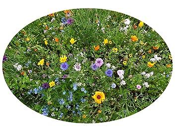 100 150 M² Blumenwiese Traumhaft Schöne 1001 Nacht Blumenzauber