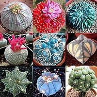 Go Garden 01: Semillas 100 piezas/bolsa de Cactus Bonsai perennes plantas suculentas raras Semillas Jtoo 02