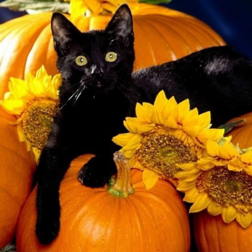 Halloween Live Wallpaper App (Crazy Halloween Live)