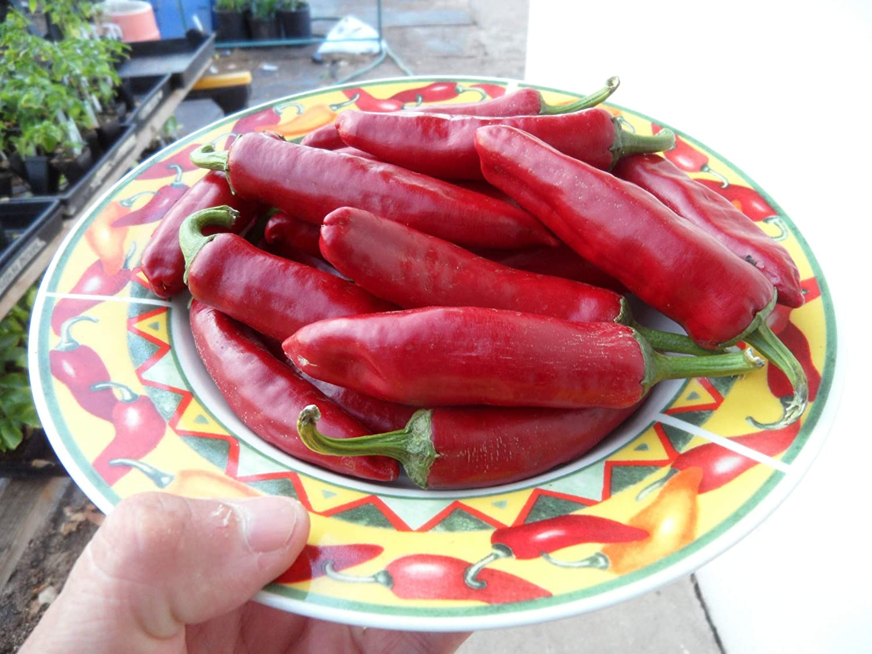 Szegedi 179 Paprika Pepper 10+ Seeds