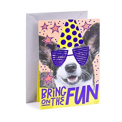 Amazon Hallmark Pop Up Birthday Card Birthday Dog Office
