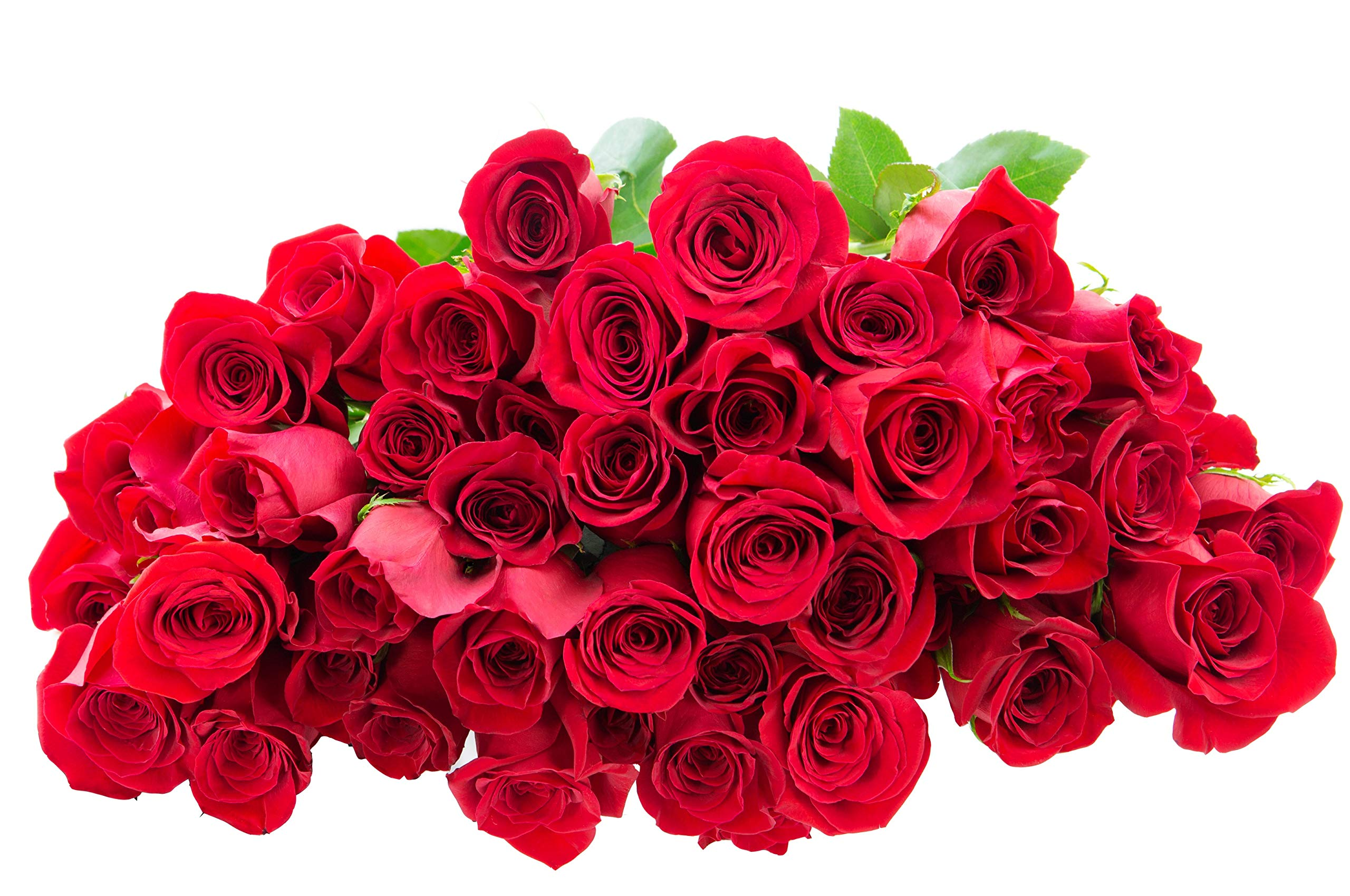 Blooms2Door 50 Red Roses (Farm-Fresh, Long Stem - 50cm) - Farm Direct Wholesale Fresh Flowers