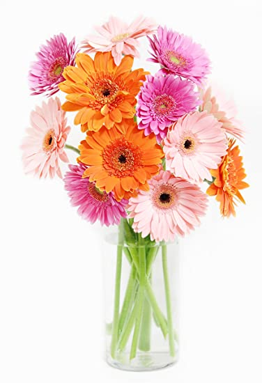 Amazon Assorted Gerbera Daisy Bouquet 12 Stems With Vase