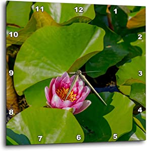 3dRose Croatia, Zagreb. Water Lily Plant in Botanical Gardens - Wall Clocks (DPP_330499_3)