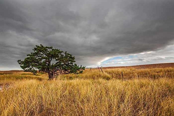 South Dakota Landscape Photography Print - Picture of Lone Tree in Grass in  Badlands Nature Decor - Amazon.com: South Dakota Landscape Photography Print - Picture Of