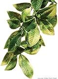 Exoterra Décoration Croton Plante Plastique Grand Modèle pour Reptiles et Amphibiens