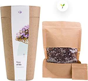 kiri Bio Urn for Human and Pet Cremation Ashes for Funeral and Burial. Grow a Living Memory Tree from The Ashes. 100% Biodegradable Urn. Plant a Tree and Help Save The Planet