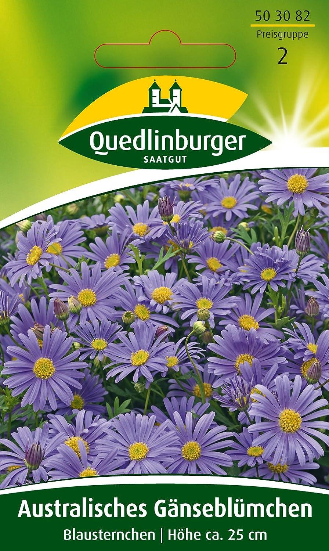 65 Samen Blaues G/änsebl/ümchen ca Zwerg Margerite Brachycome iberidifolia