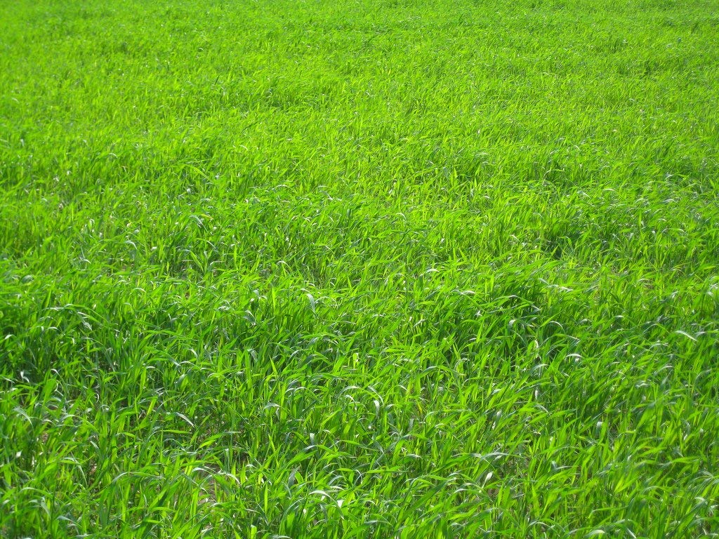 Nature's Seed TURF-LOPE-2000-F Perennial Ryegrass Seed Blend, 2000 sq. ft. by Nature's Seed