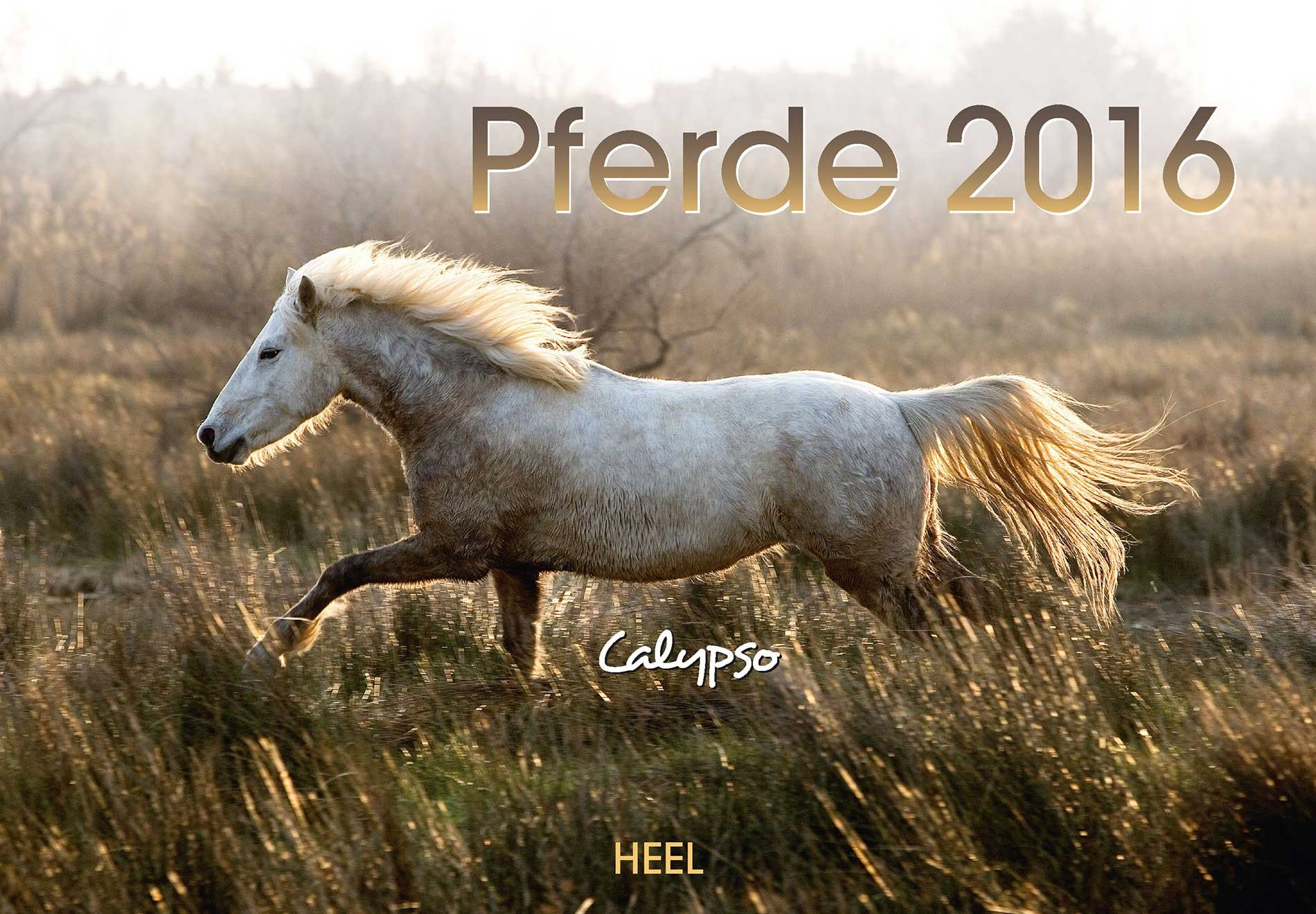 Pferde 2016
