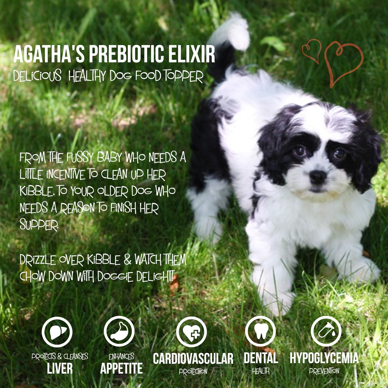 Agatha's Elixir Prebiotics for Dogs ● Appetite Stimulant for Picky Eaters and Senior Pets ● Green Tea & Milk Thistle Boost Immune System, Liver Detoxifier by Agatha's Pet Wellness (Image #4)