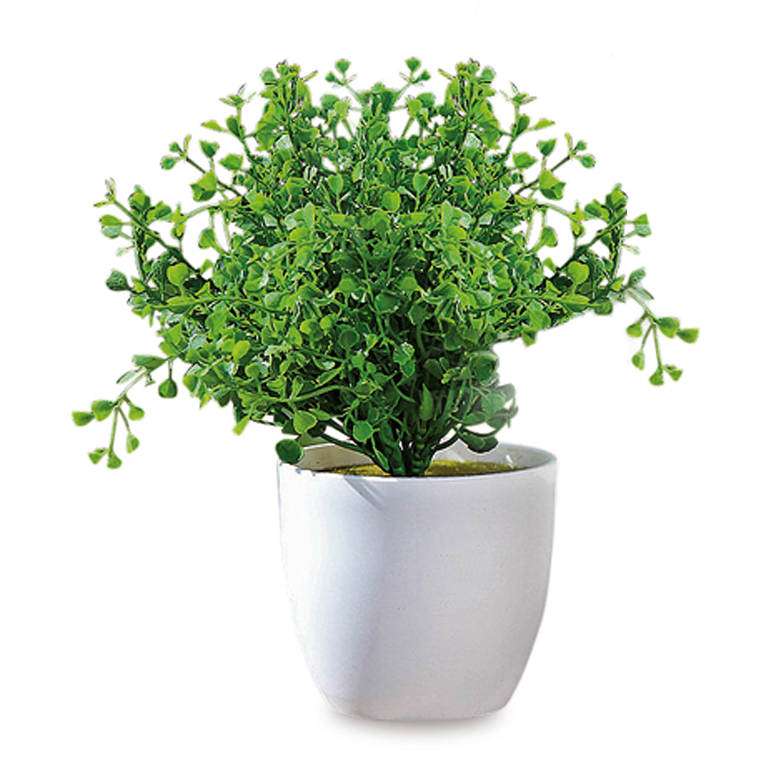 Realistic Faux Baby Oregano, Potted Plant, Houseplant, Kitchen, Lushly Leafed, White Pot, 6 inches Diameter x 9 3/4 Tall WHW by Whole House Worlds