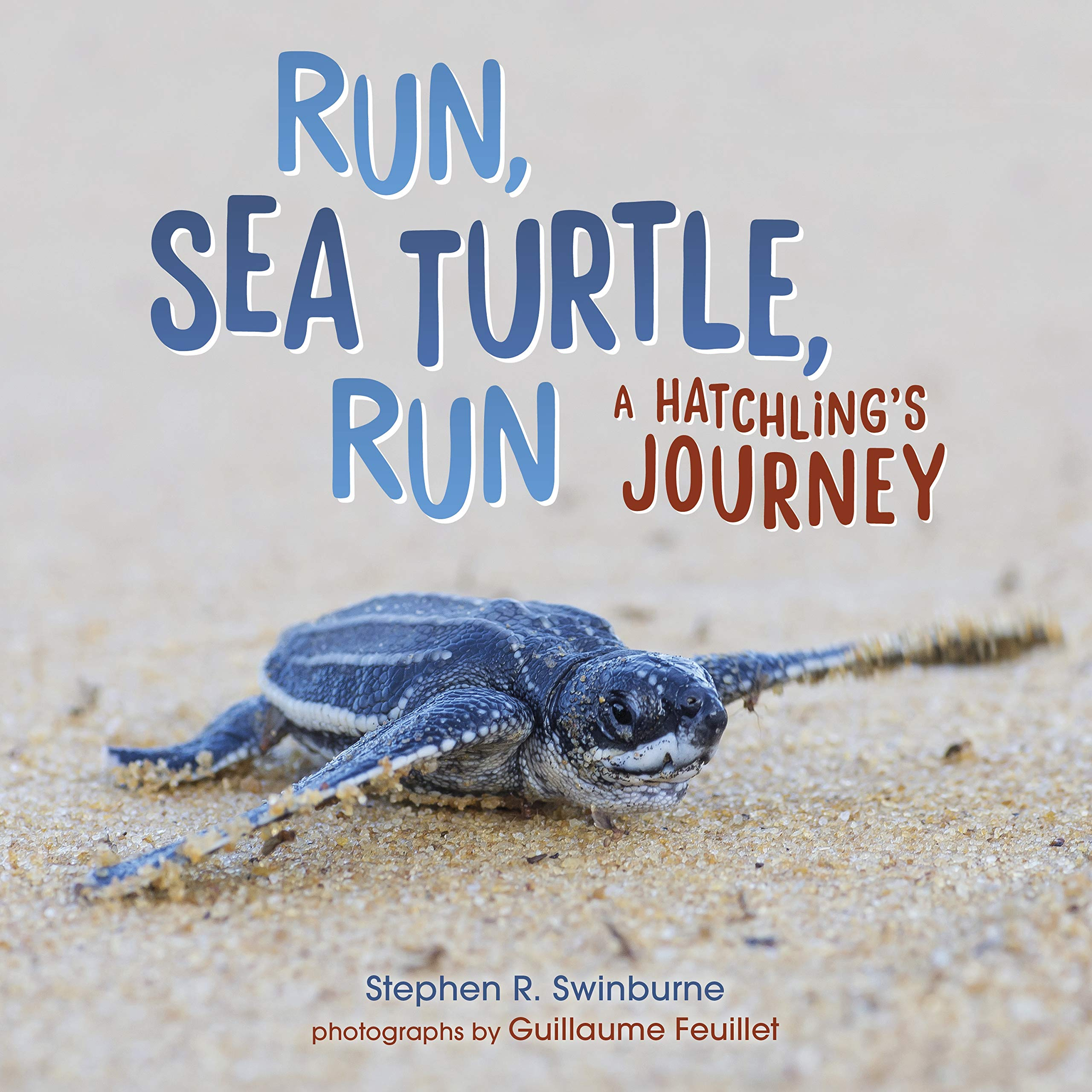 Image result for run sea turtle run swinburne