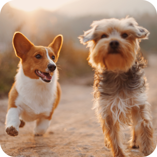 - Dog Wallpapers