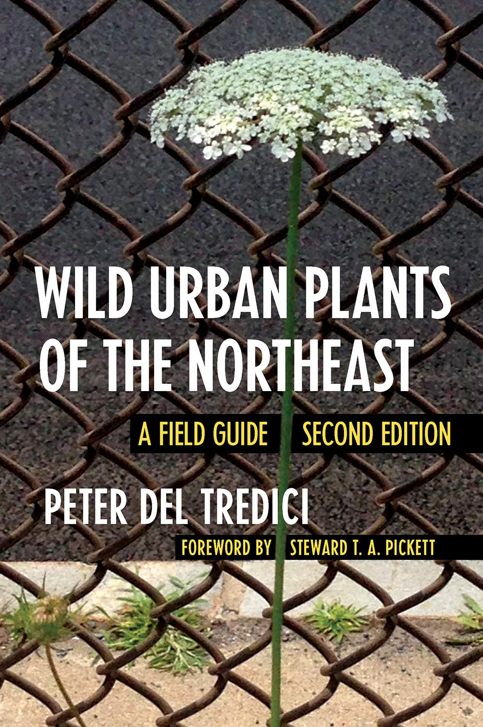 Wild Urban Plants of the Northeast -Cover Art - link to Jumpstart item record