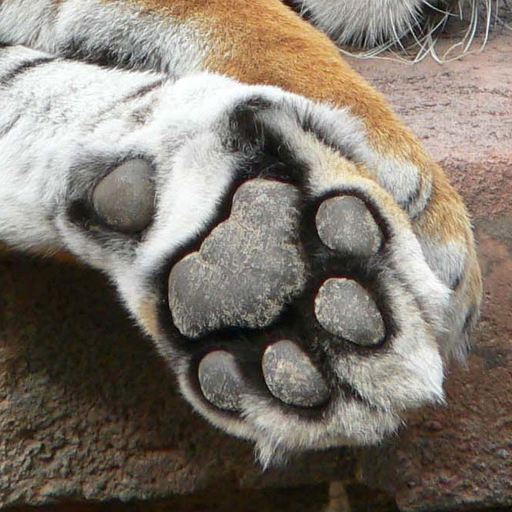 (Animal Paws and Claws 2)