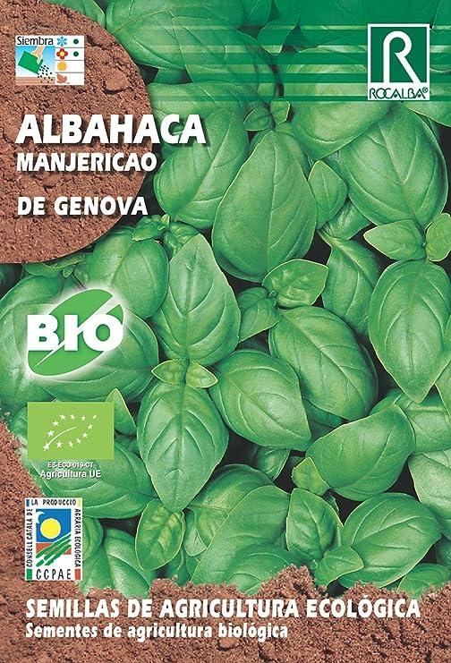 SEMILLAS ECOLOGICAS ALBAHACA DE GENOVA: Amazon.es: Jardín