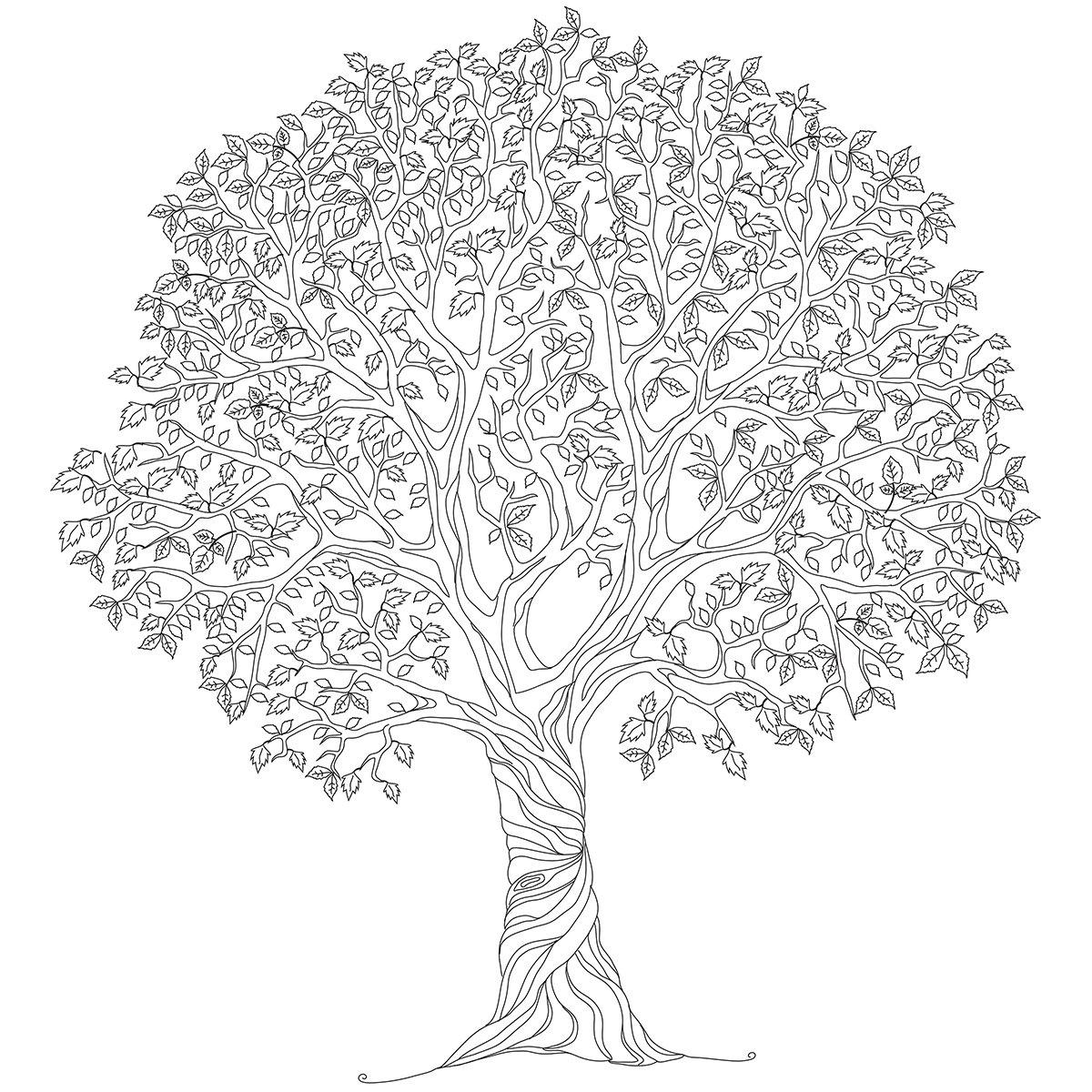 KaiserColour Coloring Poster 27''X19''-Tree