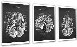 Neuroscience Art set of 3 unframed Prints of Human Brain Anatomy Art