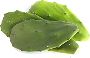 12-Oz Fresh Tortoise Turtle Iguana Reptile Super Food Spineless Opuntia Prickly Pear Cactus