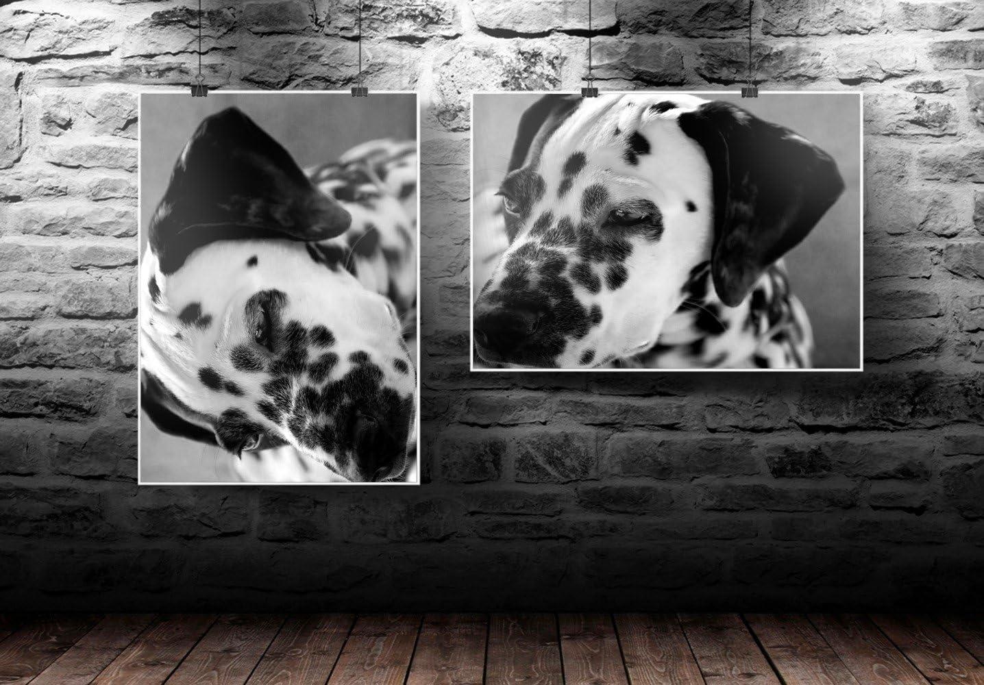 Chiens 070 Dalmatien Grandeur: 8.5 x 11-22 x 28 cm Poster en Vinyle Affiche Plastifi/ée Murale Pop-Art D/écoration Int/érieure avec Dessin Color/é