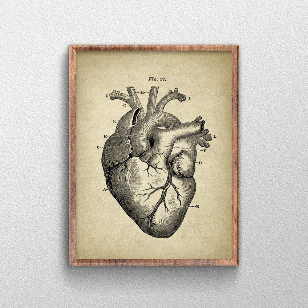 Amazon Qg Art Heart Anatomy Human Biology Art Prints Canvas