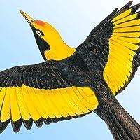 Morcombe's Birds of Australia