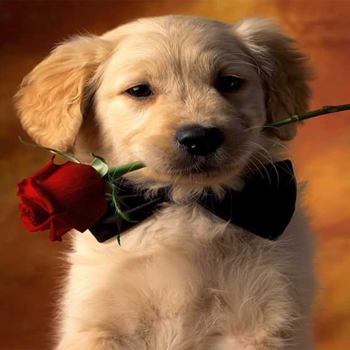 For sale cute puppies wallpaper best selling best price for Best selling wallpaper
