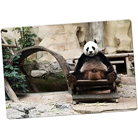 Oso Panda imán para nevera, Funny Panda In A Chair, Large: Amazon ...