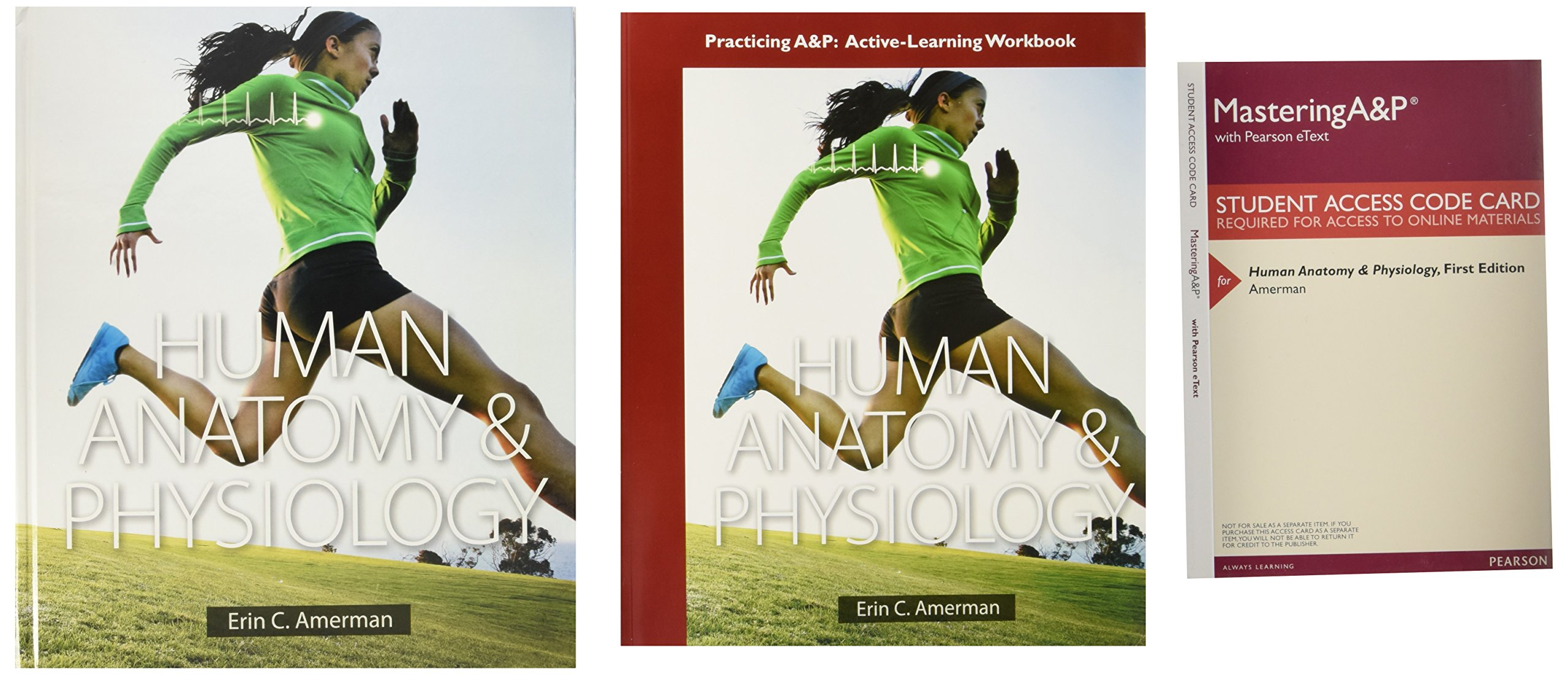 Atractivo Human Anatomy And Physiology First Edition By Erin C ...