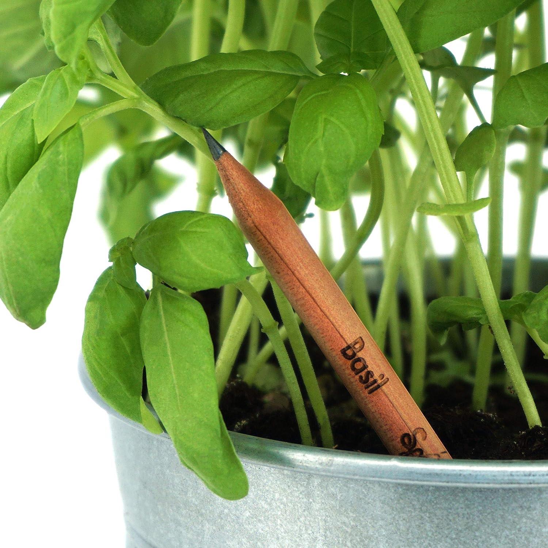 Sonderedition f/ür Lehrer 32er Pack Geschenkset mit Kr/äutern und Blumen Sprout Bleistifte aus umweltfreundlichem Holz mit Samen zum Einpflanzen