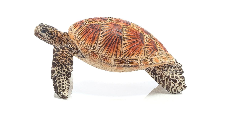 Warning turtles amp tortoises inc - Warning Turtles Amp Tortoises Inc 4