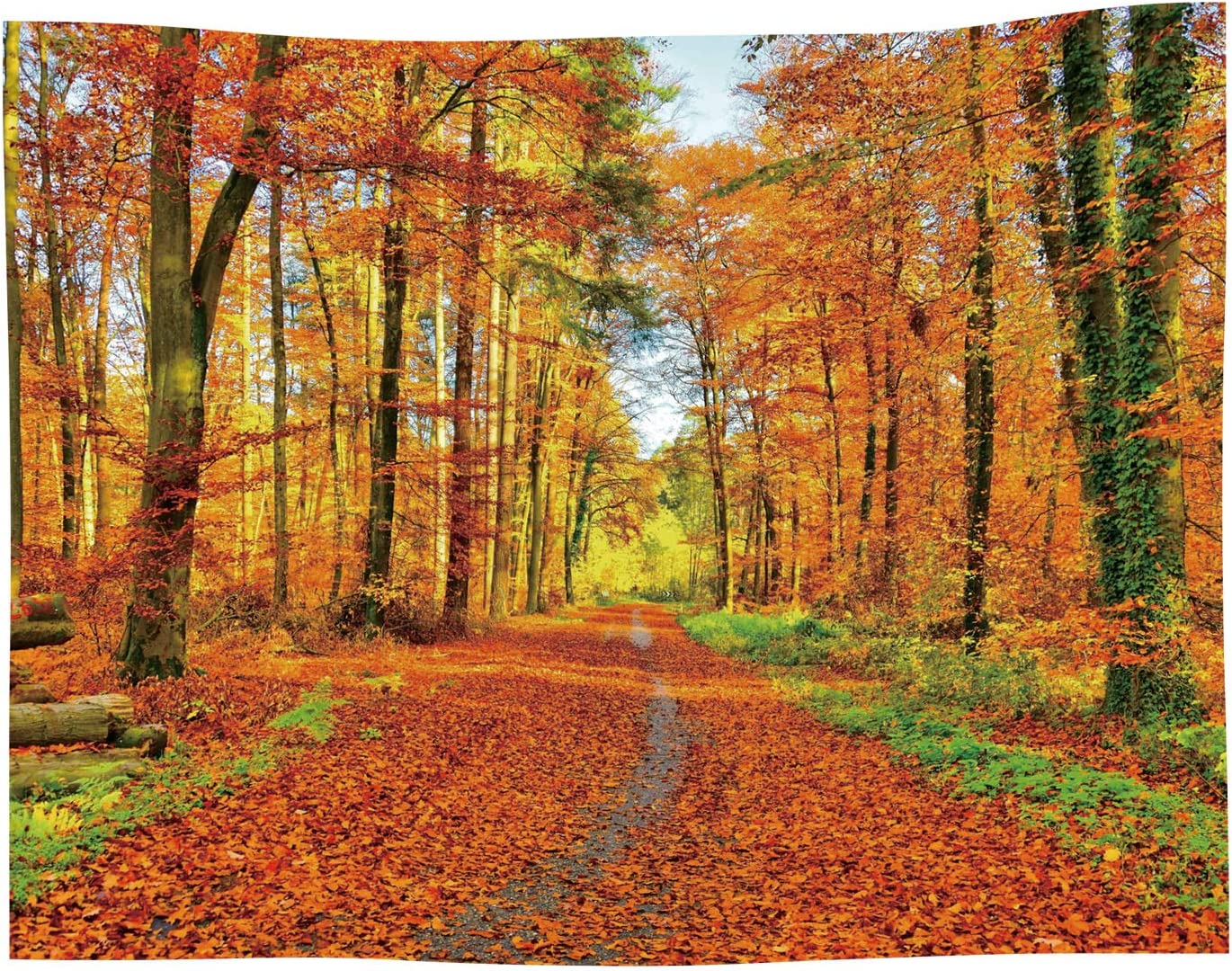 Amazon Com Autumn Landscape Tapestry Fall Nature Scenic Scenery Trees Woods Forest Plant Leaves Art Decor Wall Hanging For Bedroom Living Room Dorm Home Kitchen