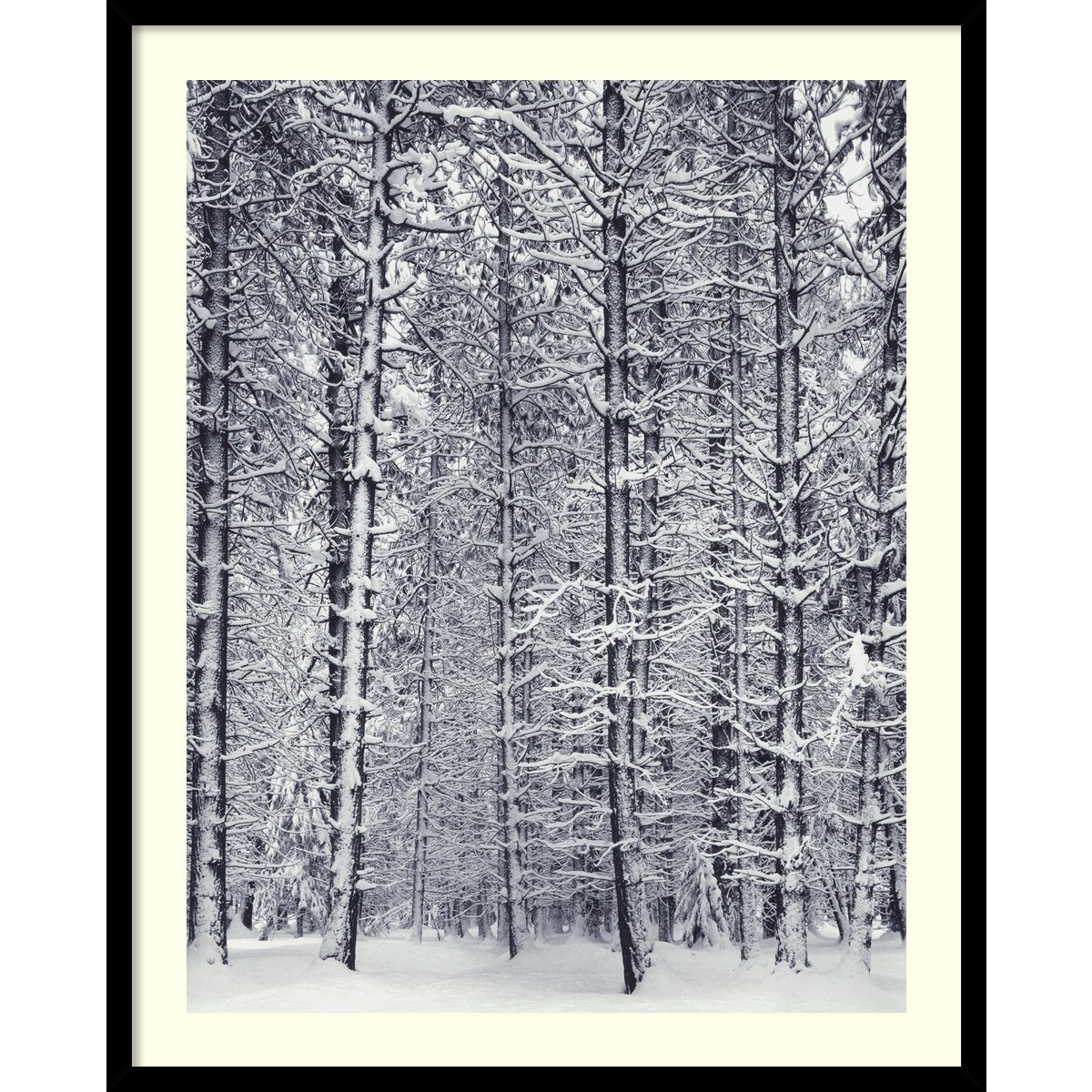 Framed Art Print, 'Pine Forest in the Snow, Yosemite National Park' by Ansel Adams: Outer Size 25 x 31'' by Amanti Art
