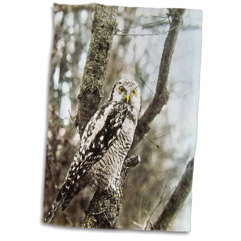 3D Rose Birds of Europe Owl 1910 Ornithology Nature Study Magic Lantern Slide Hand Towel 15 x 22