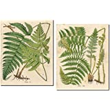 Popular Old-Fashioned Fern Botanical Prints; Two 11x14in Poster Prints