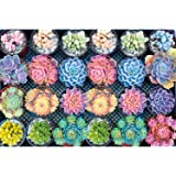 Meryi Succulent Plants Jigsaw Puzzles for Adults 1000 Piece, Adult Children Intellective Educational Toy DIY Collectibles Mod