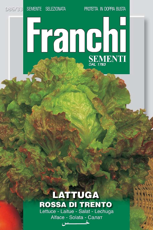 Franchi Samen Roter Salat Rossa of Trento