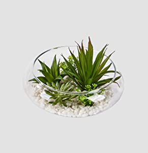 "Worth Imports Dish Garden on Stones in 6"" Glass Container Succulent, Green, White, Clear"