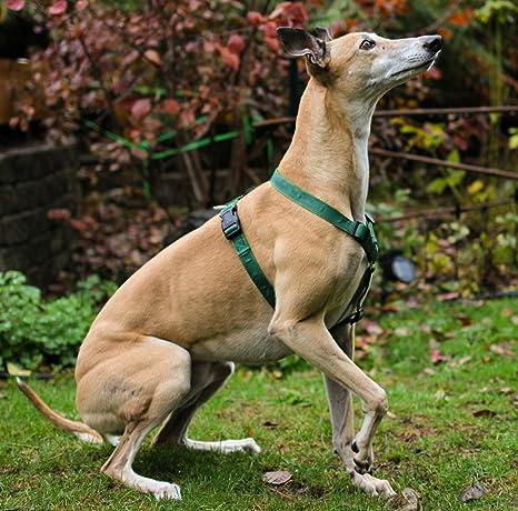 Amazon.com : Gladton EXTRA STRONG Dog Harness for Medium Large Dogs