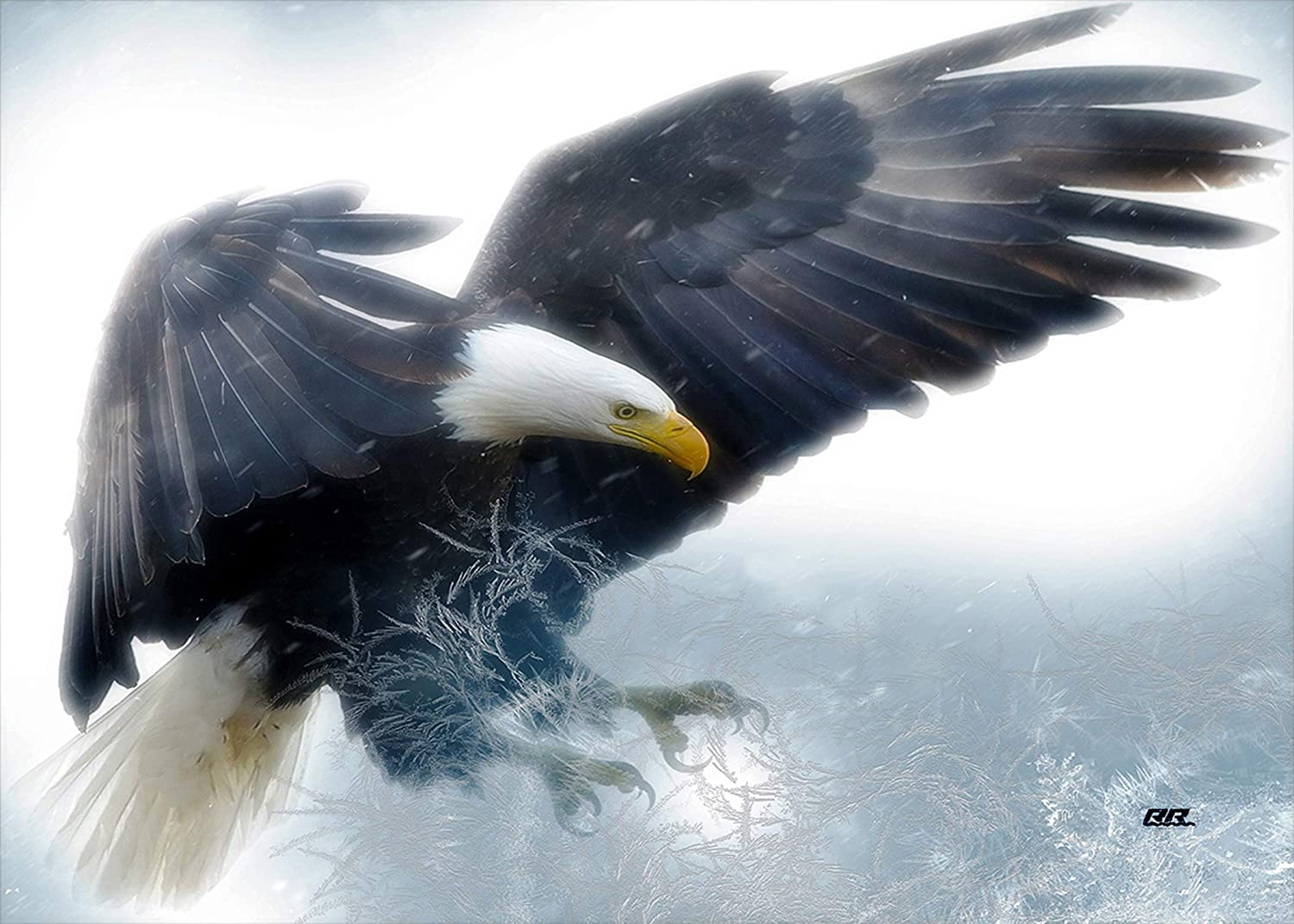Rogue River Tactical Large Wildlife Animal Print Flying American Bald Eagle Canvas Print Wall Decor Art Decoration 20x16 Inch