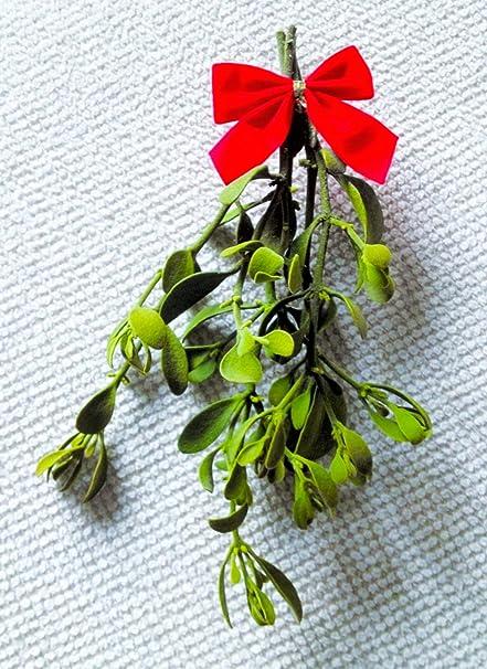 amazon com mistletoe 1 small bundle 5 to 7 inches fresh real