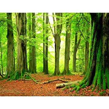 Fototapeten Wald 352 x 250 cm Vlies Wand Tapete Wohnzimmer ...